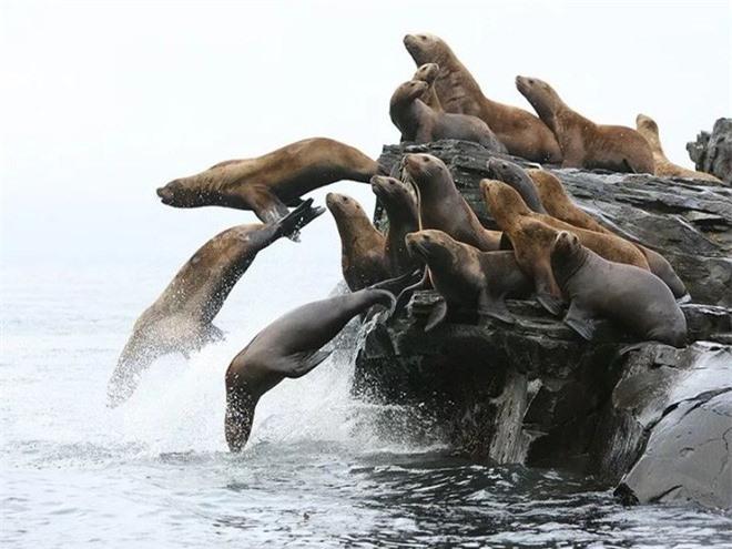 Chỉ mất 27 năm từ khi phát hiện ra đến khi tuyệt chủng, chuyện gì đã xảy ra với con vật khổng lồ dưới biển này? - Ảnh 8.