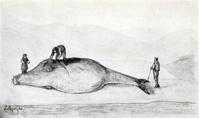 Chỉ mất 27 năm từ khi phát hiện ra đến khi tuyệt chủng, chuyện gì đã xảy ra với con vật khổng lồ dưới biển này? - Ảnh 9.