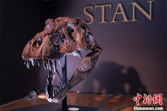 Chiêm ngưỡng một trong những bộ xương khủng long lớn nhất thế giới vừa được bán với mức giá trên trời - Ảnh 3.