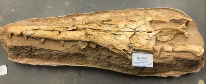 Thủy quái 17 mét trong hầm mỏ: loài chưa từng thấy trên thế giới - Ảnh 2.