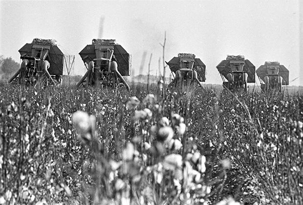 Máy liên hợp thu hoạch bông ở Uzbekistan, năm 1973.