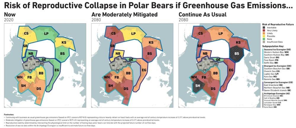 Gấu Bắc cực sẽ biến mất vào năm 2100? - 2