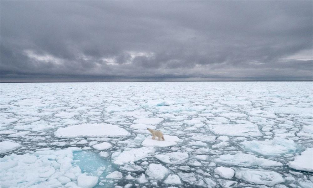 Gấu Bắc cực sẽ biến mất vào năm 2100? - 4