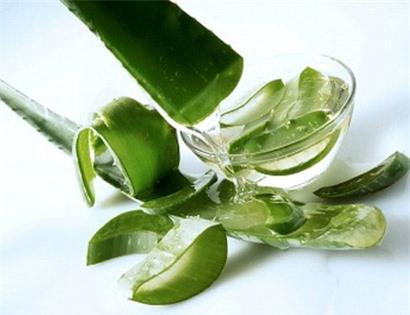 Lô hội cũng là một trong những vị thuốc tự nhiên chữa bệnh đau dạ dày hiệu quả