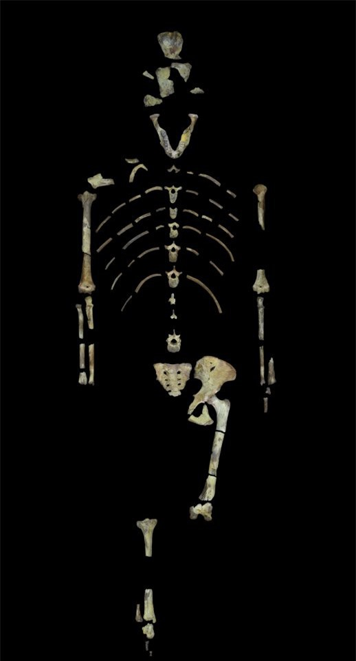 Tìm ra nguyên nhân cái chết của Lucy - tổ tiên loài người - ảnh 1