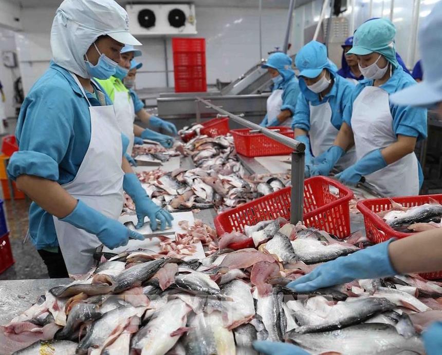 Xuất khẩu cá tra không nên trông chờ vào một thị trường.