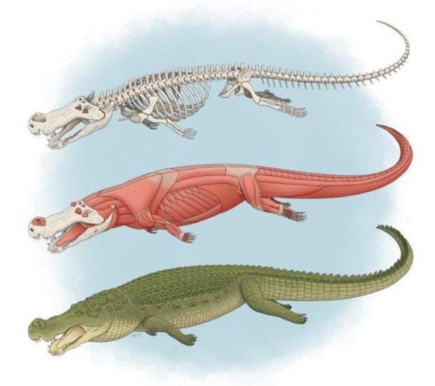Phát hiện mới về cá sấu khổng lồ từng ăn thịt khủng long - 2