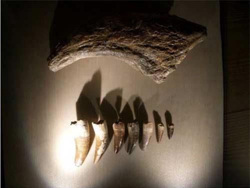 """Phát hiện """"nghĩa địa"""" khủng long lớn nhất TG - 3"""