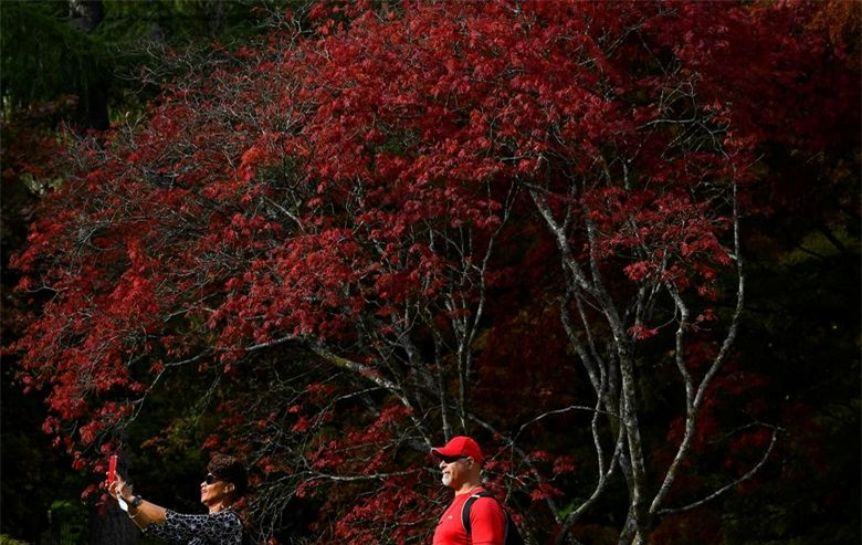 Du khách ngắm nhìn những tán lá màu sắc mùa thu tại Vườn ươm Westonbirt ở Tetbury, Anh, ngày 29/9.