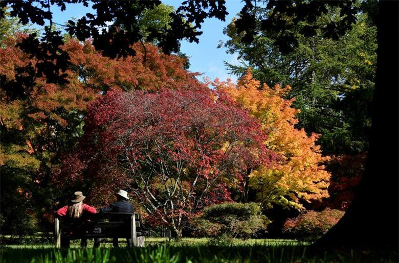 Du khách ngắm nhìn những tán lá màu sắc mùa thu tại Vườn ươm Westonbirt, Tetbury, Anh, ngày 29/9.