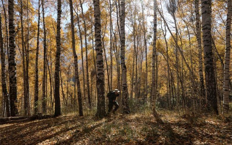 Một du khách đi dạo vào một ngày mùa thu đầy nắng trong một khu rừng bên ngoài Almaty, Kazakhstan ngày 13/10.