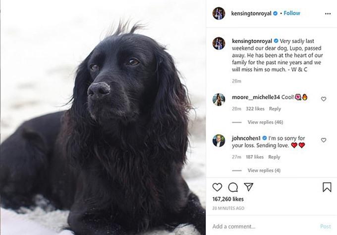 Nhà Cambridge thông báo tin buồn về cái chết của Lupo hôm 22/11. Ảnh: Instagram.