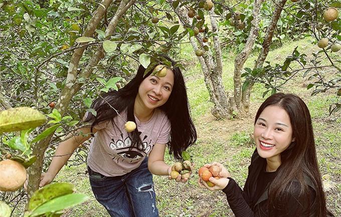 Trong khi các ông chồng luyện tập, bà xã của Việt Hoàn - ca sĩ Hoa Trần (áo đen) - đưa bà xã của ca sĩ Trọng Tấn thăm vườn chanh đào sai trĩu quả.