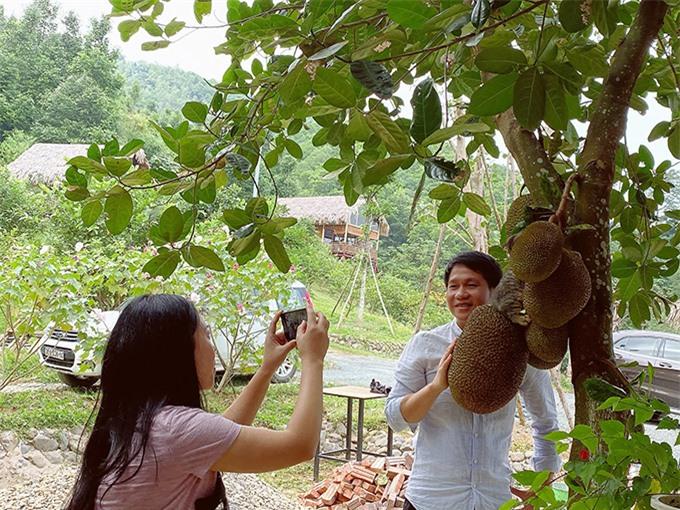 Vợ chồng ca sĩ Trọng Tấn rất thích thú với vườn mít sai trĩu quả.