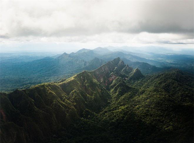 """Giat minh mon an """"di thuong"""" cua bo lac trong rung gia Amazon-Hinh-2"""