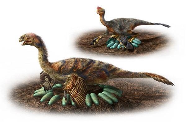Minh họa cách ấp trứng tài tình của loài khủng long Oviraptorosaurs. Ảnh: CBC