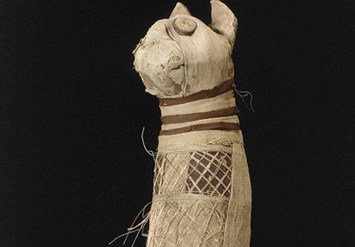 Chụp CT xác ướp mèo nghìn tuổi, phát hiện chấn động