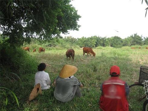 Việc nhẹ lương cao: Tuyển người chăn bò lương 6,5 triệu/tháng, có chế độ bảo hiểm đầy đủ và lương tháng 13? - Ảnh 2.