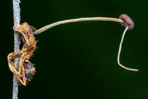 CLIP: Kinh hãi khi nhìn thấy 'xác sống' trong thế giới động vật