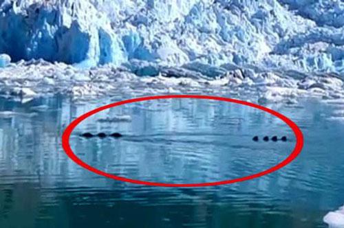 Phát hiện quái vật rồng khổng lồ trên sông băng?