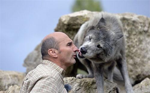Ảnh đẹp: Huấn luyện sói đóng phim - 6