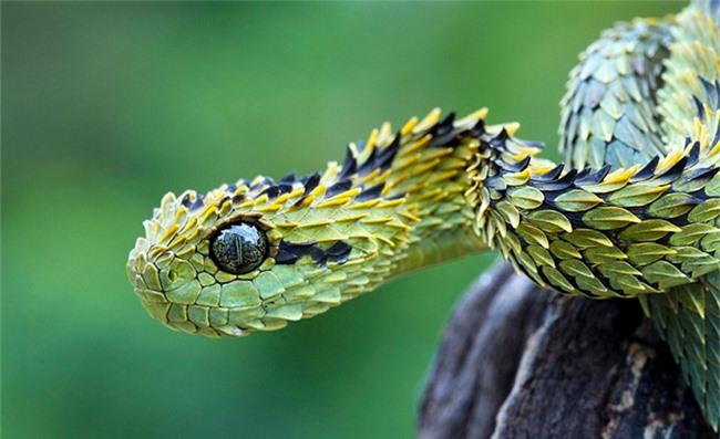 Những động vật đột biến kỳ lạ - 11
