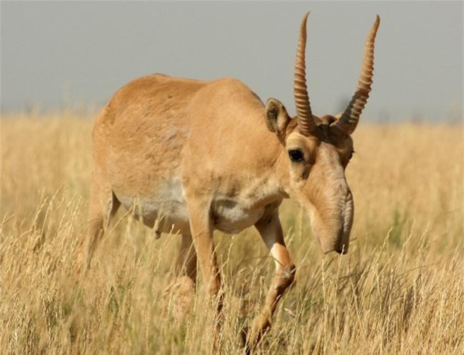 Những động vật đột biến kỳ lạ - 14