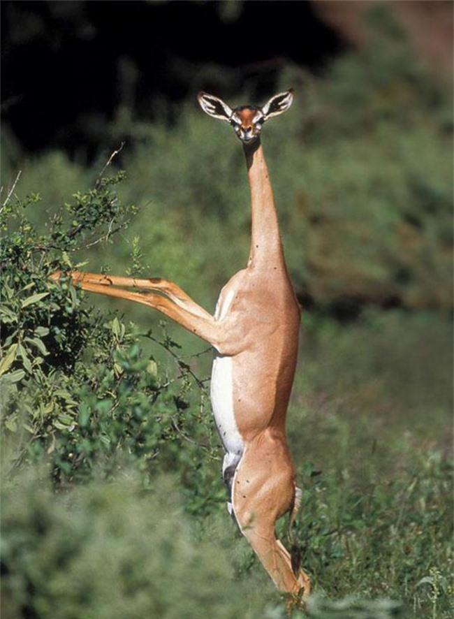 Những động vật đột biến kỳ lạ - 19
