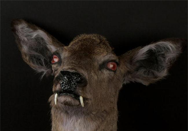 Những động vật đột biến kỳ lạ - 2