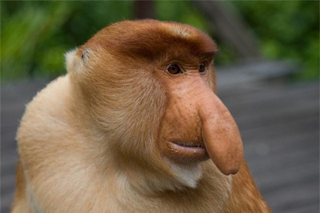 Những động vật đột biến kỳ lạ - 8