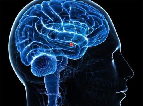 Phát hiện nơi cất giữ ký ức sợ hãi trong bộ não