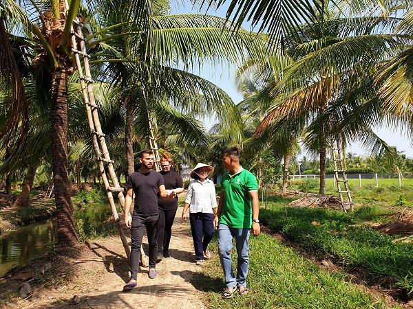Khai thác mật hoa dừa đã cho những giá trị kinh tế cao.