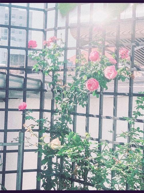 Nữ nghệ sĩ tận dụng các khoảng trống của ngôi nhà để trồng hoa hồng Anh.
