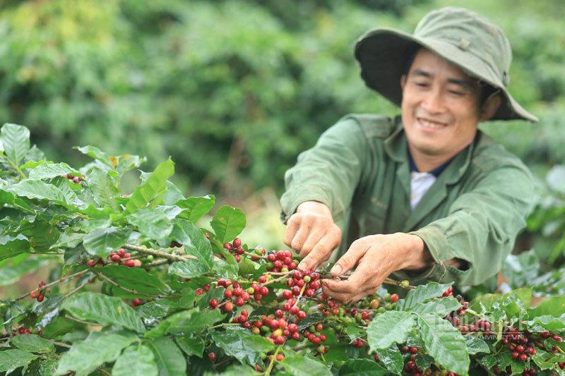 Ngày cà phê Việt Nam lần 4/2020: Nơi hội tụ của nhiều doanh nghiệp cà phê hàng đầu