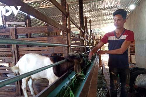 """Gia Lai: Thủ phủ hồ tiêu Chư Pưh """"hồi sinh"""" nhờ chuyển đổi cơ cấu cây trồng"""