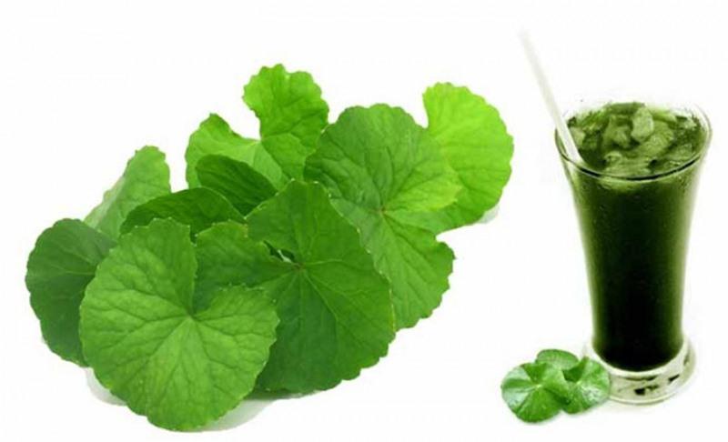 Rau má là một trong những  thực phẩm tự nhiên rất tốt cho sức khỏe và sắc đẹp của chị em phụ nữ. Không chỉ là nguyên liệu chính làm nên hương vị đặc trưng cho các bữa ăn hằng ngày, loại rau này còn có tác dụng rất tốt trong việc chữa bệnh và làm đẹp.