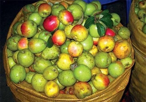 me-bau-va-nhung-thuc-pham-nen-tranh-khi-mang-thai-giadinhvietnam.com 8