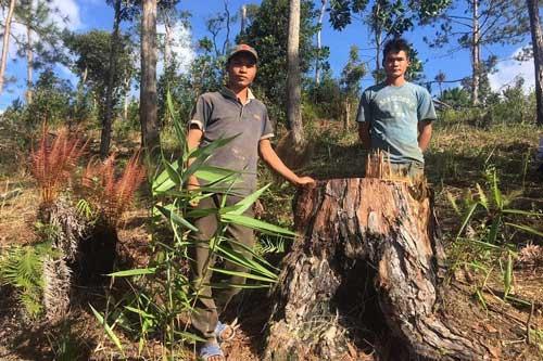 Tiếp tục khởi tố đối tượng phá rừng ở Lâm Đồng