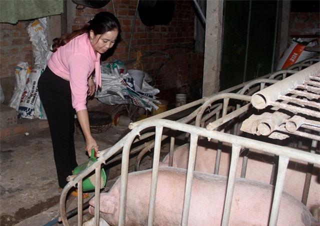 Vựa heo lớn nhất miền Trung gượng dậy sau dịch tả lợn châu Phi - 2