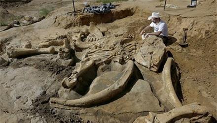 Sốc vì phát hiện bộ xương voi ma mút trong vườn nhà