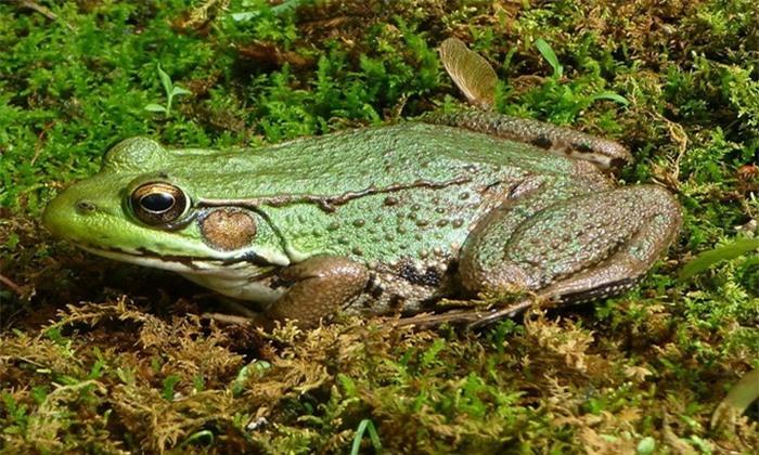 5 loài vật có khả năng chuyển giới linh hoạt từ đực sang cái tùy tình hình - Ảnh 6.
