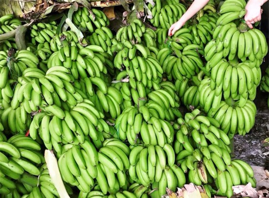 Những giống chuối đặc sản nổi tiếng ở Việt Nam