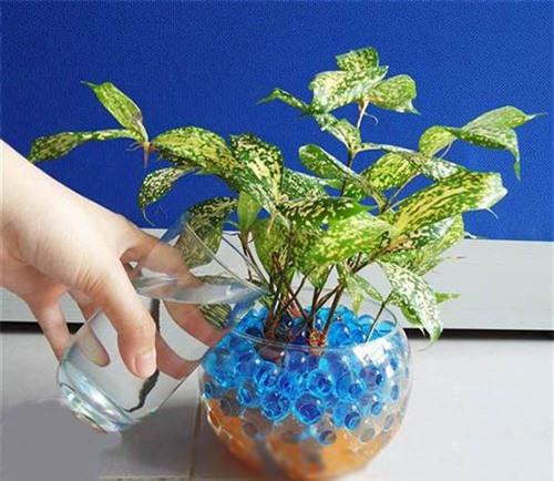 Kỹ thuật trồng cây cảnh thủy cảnh kết hợp với đá màu, bình thủy tinh sẽ cho ra những tác phẩm tinh tế, sáng tạo