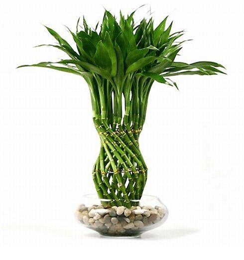 Có khả nhiều loại cây phù hợp với kỹ thuật trồng cây cảnh thủy canh