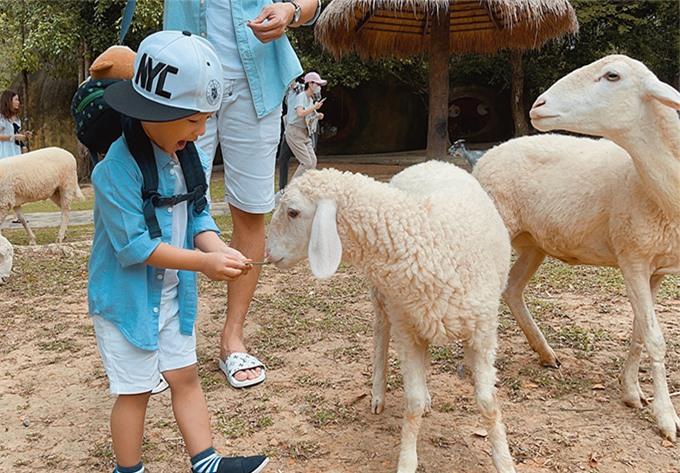 Trong chuyến đi này, bé Bảo Bảo rất hào hứng vì lần đầu được vào vườn bách thú và chơi đùa với nhiều loài động vật. Cậu nhóc không hề thấy sợ hãi khi cho cừu ăn cỏ.
