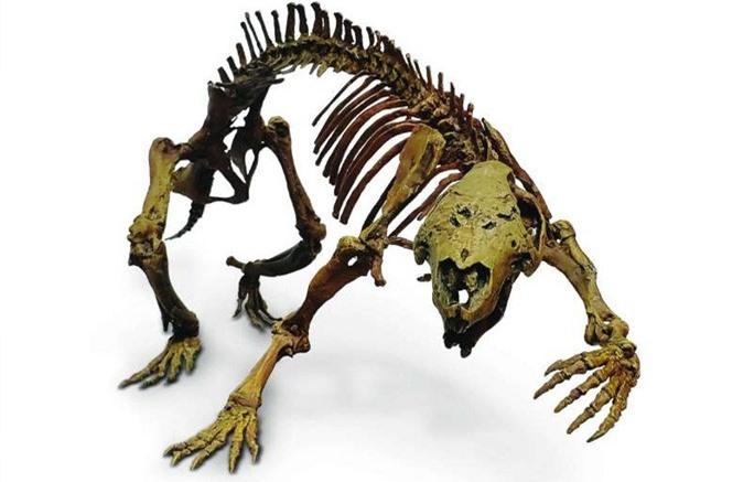 Hãi hùng con thú điên nguyên vẹn 66 triệu tuổi, sống giữa khủng long - Ảnh 1.