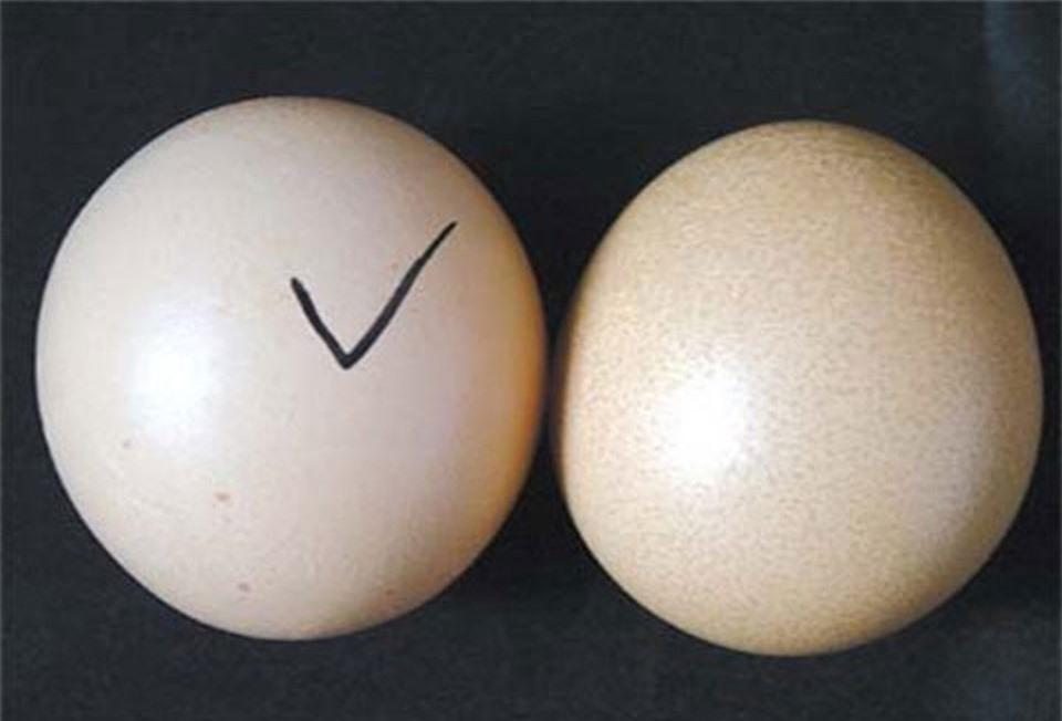 Cánh phân biệt trứng gà ta thật với trứng gà công nghiệp tẩy trắng