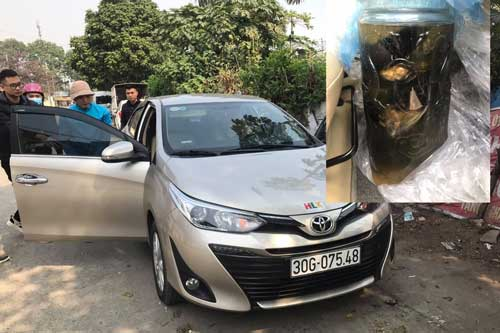 Bị bắt vì đem động vật quý hiếm đi ngâm rượu ở Hà Nội