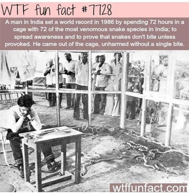 Người đàn ông dành 72 giờ chung sống với 72 con rắn kịch độc - 2
