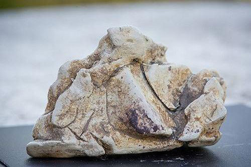 Vì sao chất béo cá nhà táng nôn ra quý hơn vàng ròng?